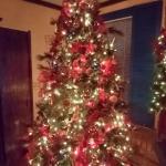 CMAS Lucas lit tree