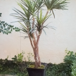 avg-trees-plants-pots-007