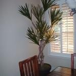 avg-trees-plants-pots-017