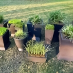 Grey pots w/grasses
