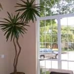 avg-trees-plants-pots-058