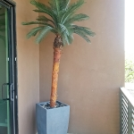 avg-trees-plants-pots-071