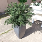 avg-trees-plants-pots-076