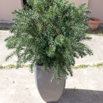 avg-trees-plants-pots-077