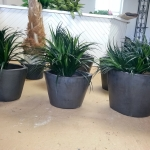 avg-trees-plants-pots-079