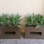 avg-trees-plants-pots-085