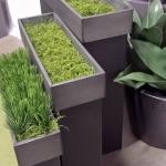 avg-trees-plants-pots-105