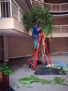 Avant Gardens - Ladder